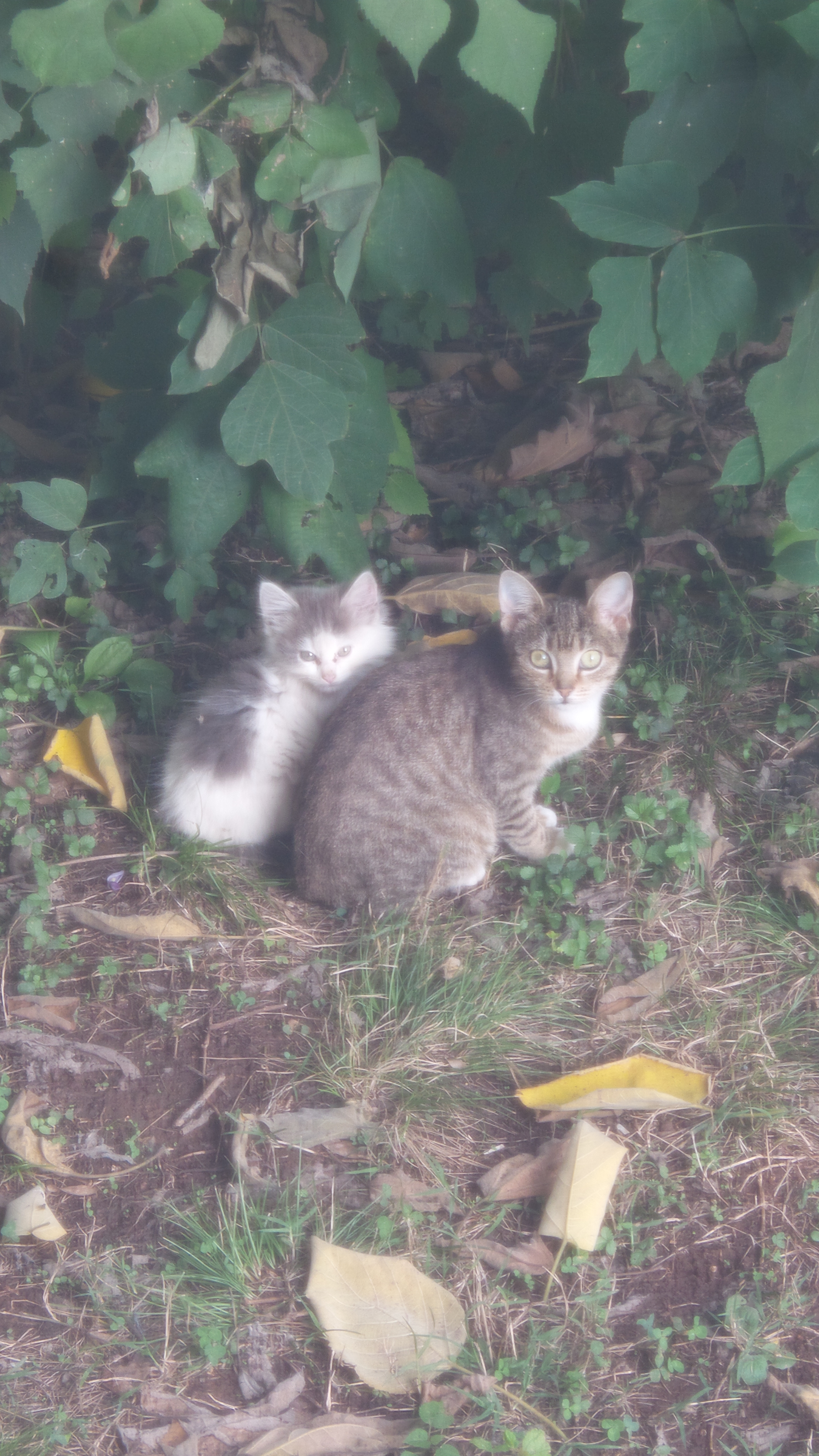Backyard kitties